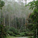 A área do Parque das Neblinas é repleta de trilhas que oferecem beleza e sossego aos visitantes.