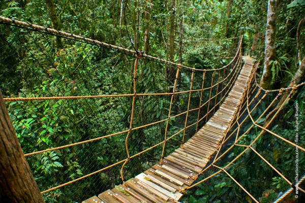 O arvorismo é uma das atividades desenvolvidas no parque, por meio de passarelas como essa a alturas superior a 7 metros do solo.