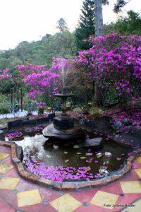 harmonia-com-a-natureza-no-ashram