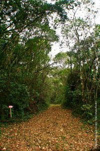 trilha-do-parque-estadual-itapetinga