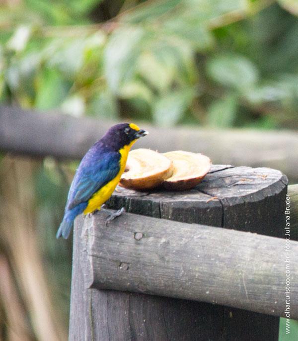 Birdwatching IBIMM, Bird feeding IBIMM