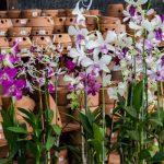 Vasos e acessórios para o cultivo
